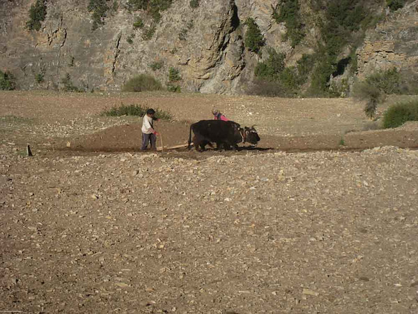 Farming on a steep hillside